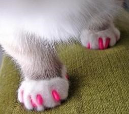 Soft Paws for Cats