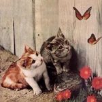 Kittens Watching Butterflies on the Fence