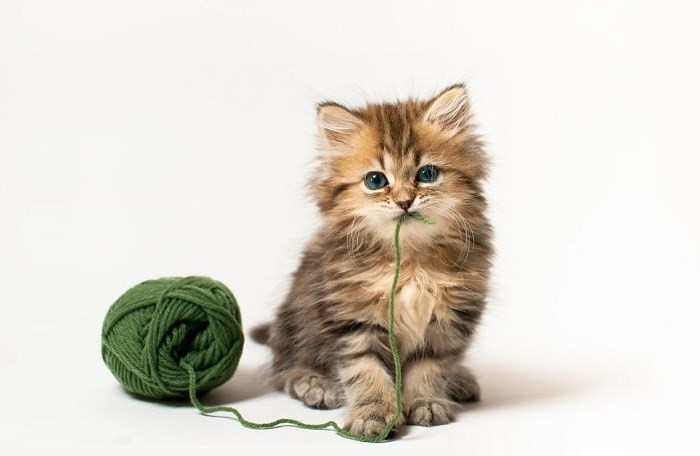 Kitteh with Green Yarn