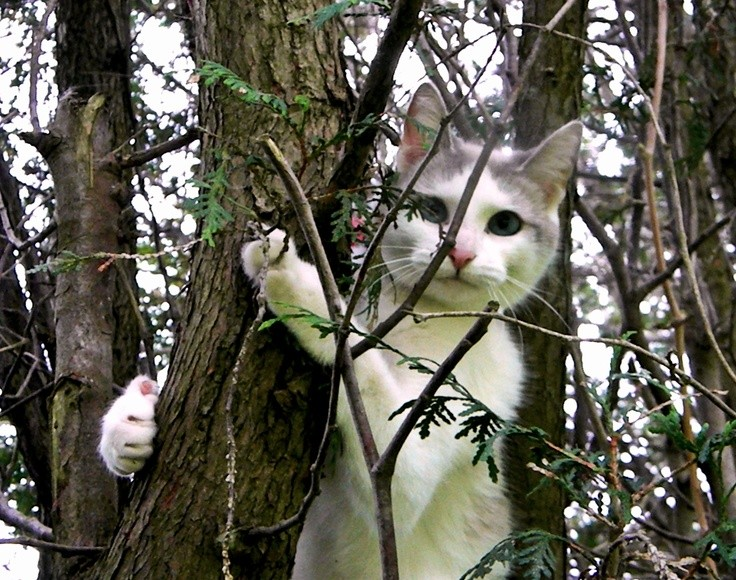 how to get your cat down out of a tree kittens whiskers. Black Bedroom Furniture Sets. Home Design Ideas