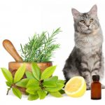 Calm Your Cats with Aromatherapy