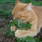 Cat Smelling Catnip