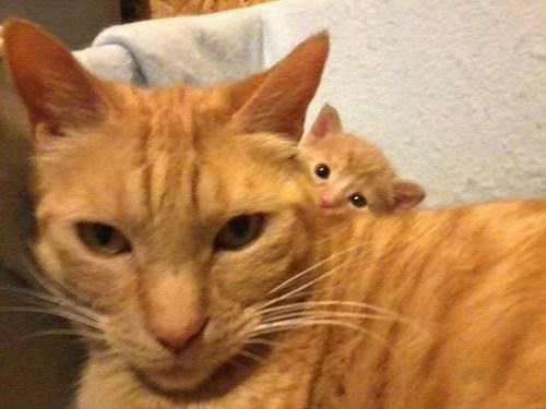 Kitten Photobomb