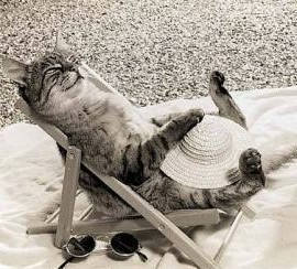 Cat Relaxing on the beach
