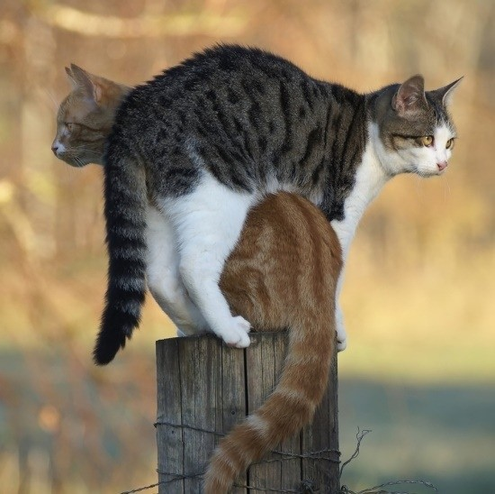 Two Cats on a post