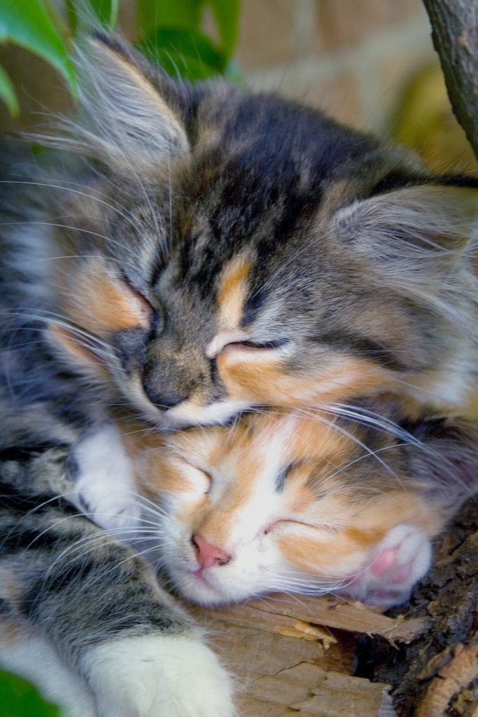 Two Kitties Sleeping