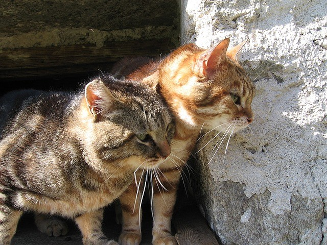 Two Cats by a Rock