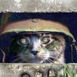 Cats in the Military – Who Knew?