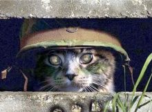 Cats in the Military