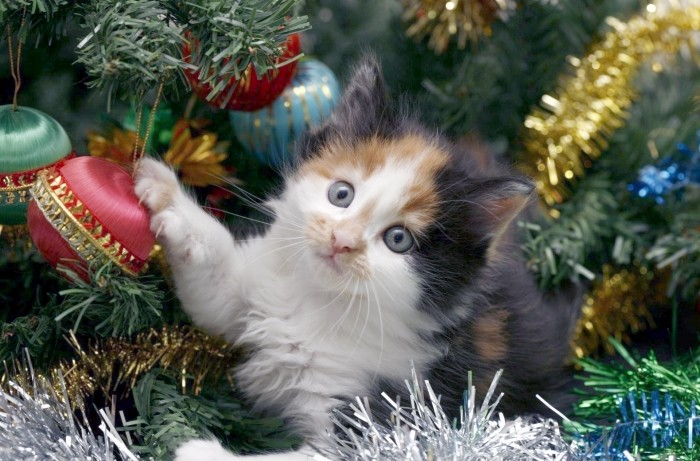 O Christmas Tree, O Christmas Tree, Your Ornaments Are History | Kittens  Whiskers
